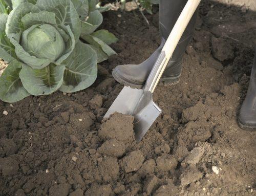 Deväť tipov pre jesenné upratovanie v záhrade