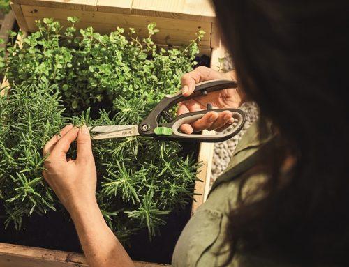 Ako si vytvoriť záhradku na balkóne